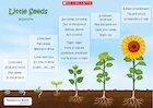 'Little Seeds' poem