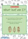What Leaf Am I?